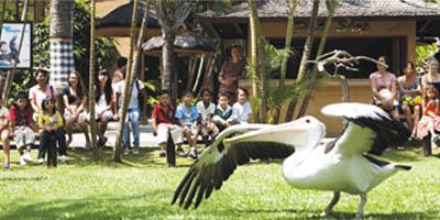 joglo bali tours bali bird park