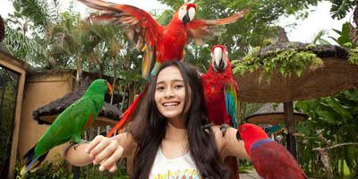 PAKET TOUR BALI + HOTEL NON BINTANG bali bird park