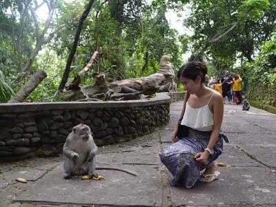 PAKET TOUR BALI + HOTEL NON BINTANG monkey forest