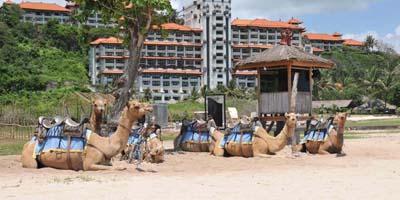 tiket wisata naik unta via joglo bali tours